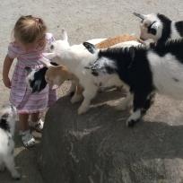 My little goat whisperer